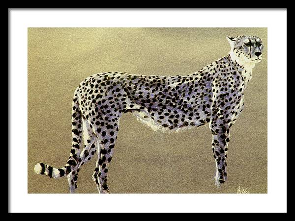 Wildlife Framed Print featuring the drawing Cheetah by Paul Miller