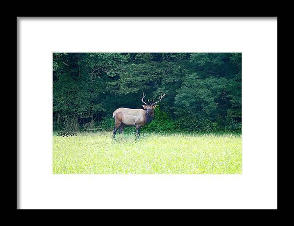 Cherokee Elk Framed Print featuring the photograph Cherokee Elk by Seth Weaver