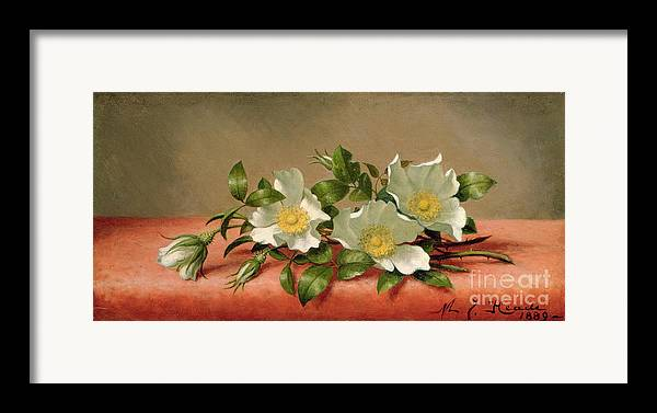 Cherokee Roses Framed Print featuring the painting Cherokee Roses by Martin Johnson Heade
