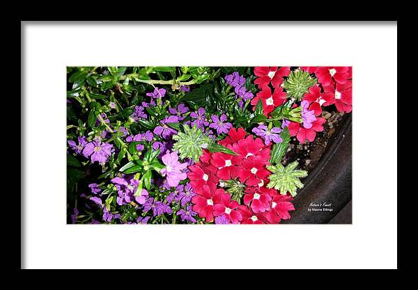 Flowers Framed Print featuring the photograph Cherry And Grape by Maxine Billings