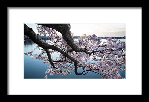 Framed Print featuring the photograph Cherry Blossom Breeze by Joshua Lebenson