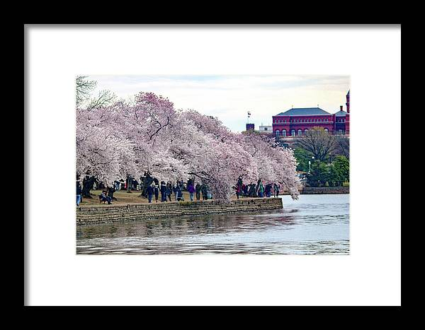 This Is A Photo Of The Cherry Blossom Festival Along The Tidal Basin In Washington D.c. Framed Print featuring the photograph Cherry Blossom In Washington D C by William Rogers