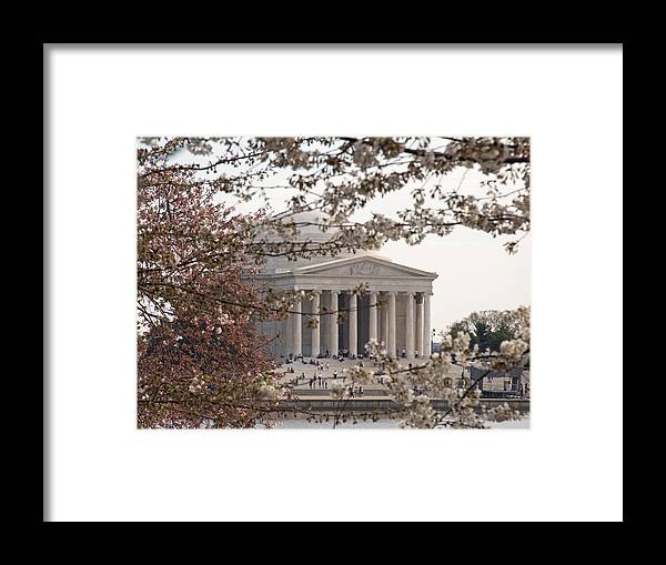 Cherry Tree Framed Print featuring the photograph Cherry Blossoms And The Jefferson Memorial by Tim Grams