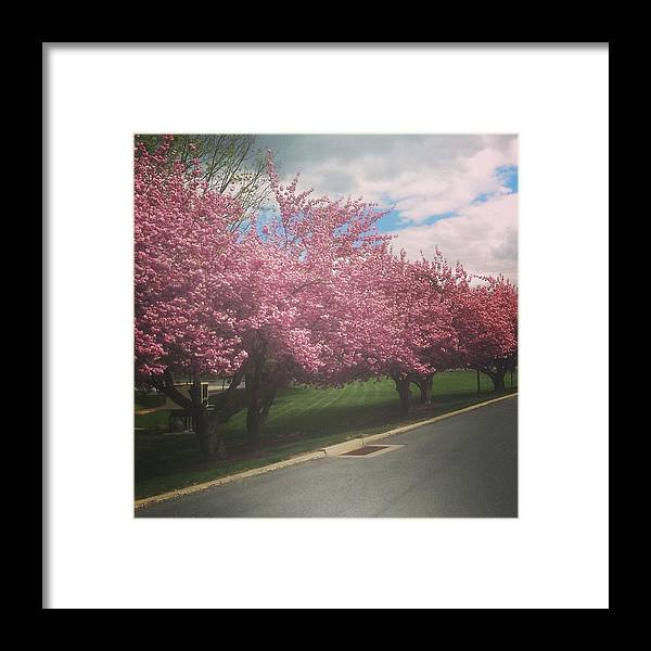Cherry Framed Print featuring the photograph Cherry Blossoms by Bc Adamkowski