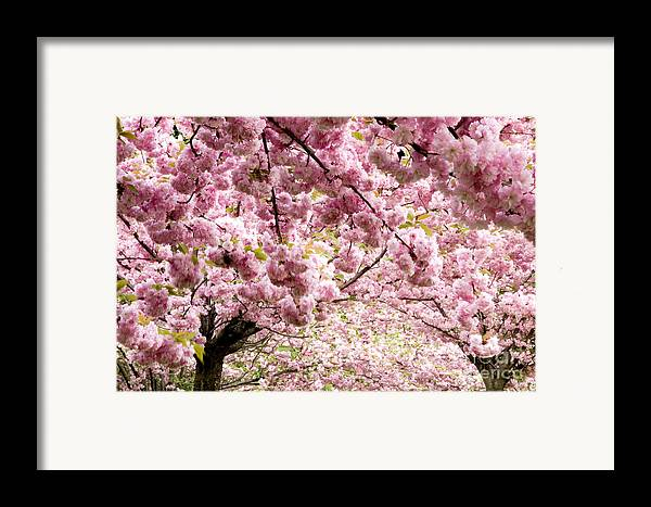 Landscape Framed Print featuring the photograph Cherry Blossoms In Milan Italy by Julia Hiebaum