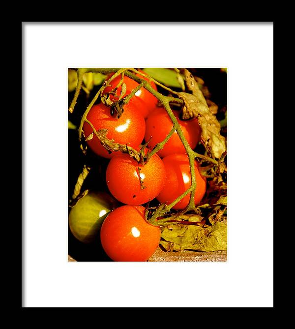 Garden Framed Print featuring the photograph Cherry Tomatoes by Sonja Anderson