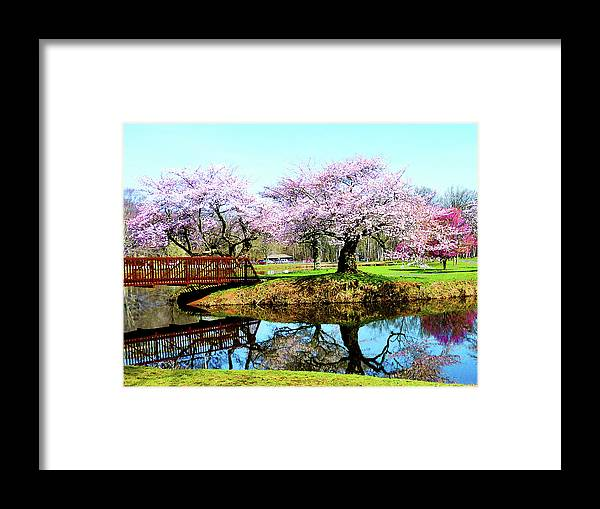 Cherry Tree Framed Print featuring the photograph Cherry Trees In The Park by Susan Savad