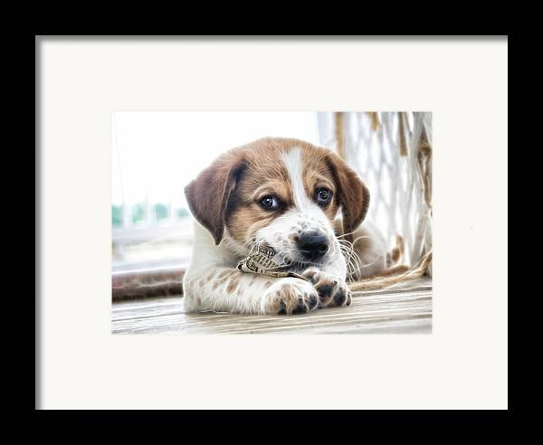 Puppy Framed Print featuring the photograph Chewing The News by Tilly Williams