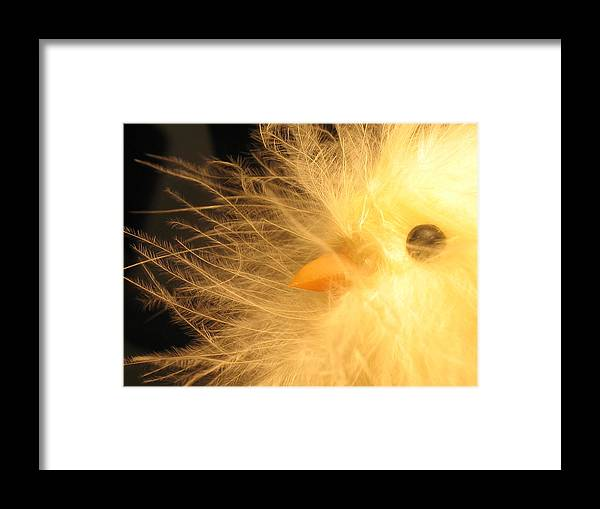 Easter Framed Print featuring the photograph Chick by Susie DeZarn