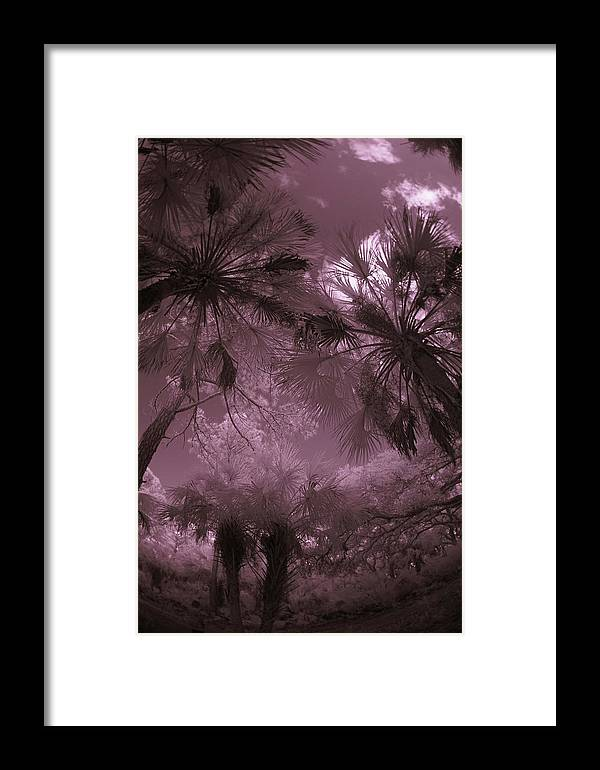 Trees Framed Print featuring the photograph Children 1 by Gary Bartoloni