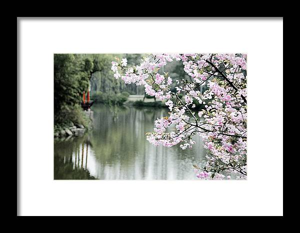 China Framed Print featuring the photograph Chinese Cherry Blossoms by Wongmo Simons