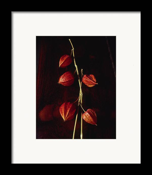 Floral Framed Print featuring the photograph Chinese Lanterns by Art Ferrier