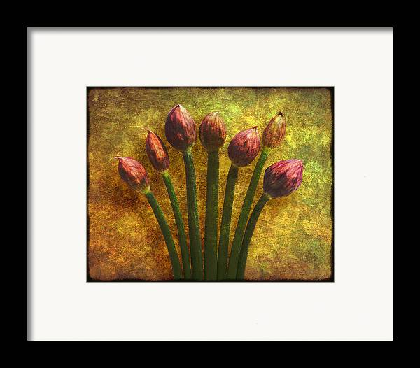 Texture Framed Print featuring the digital art Chives Buds by Digital Crafts