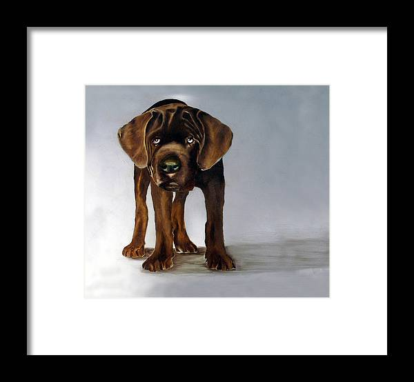 Framed Print featuring the painting Chocolate Labrador Puppy by Dick Larsen