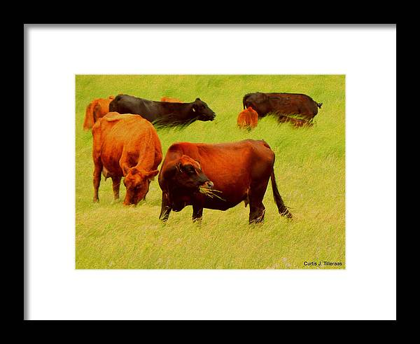 Cow Framed Print featuring the photograph Chow Time by Curtis Tilleraas