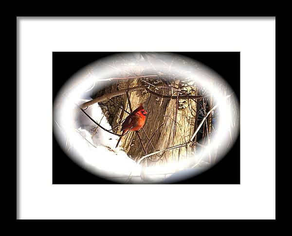 Greeting Card Framed Print featuring the photograph Christmas Cardinal by Peter Gray