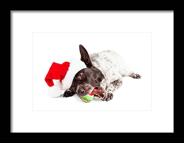 Animal Framed Print featuring the photograph Christmas Dog Chewing On Tennis Ball by Susan Schmitz