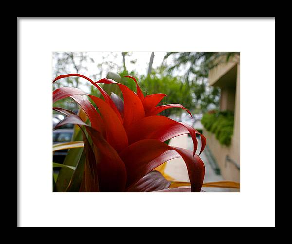 Floral Framed Print featuring the photograph Christmas Plant by Paul Anderson