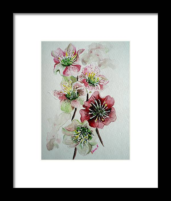 Floral Flower Pink Framed Print featuring the painting Christmas Rose by Karin Dawn Kelshall- Best