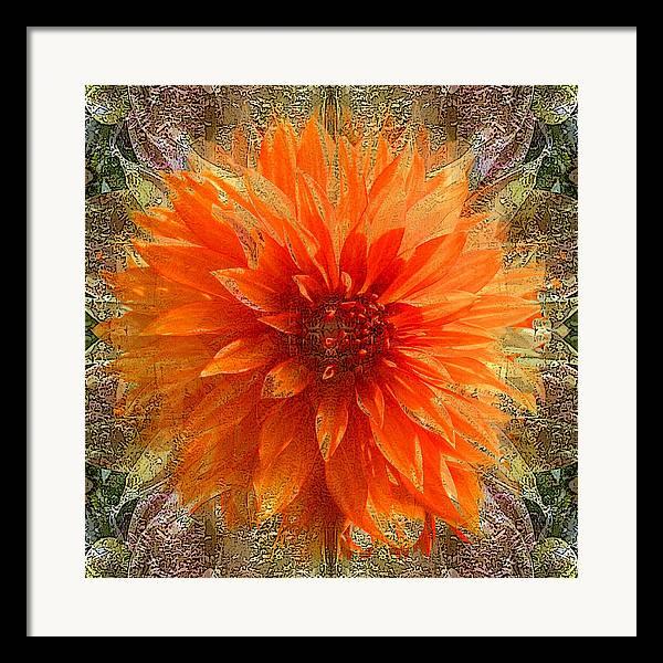 Digital Art Framed Print featuring the photograph Chrysanthemum by Tom Romeo