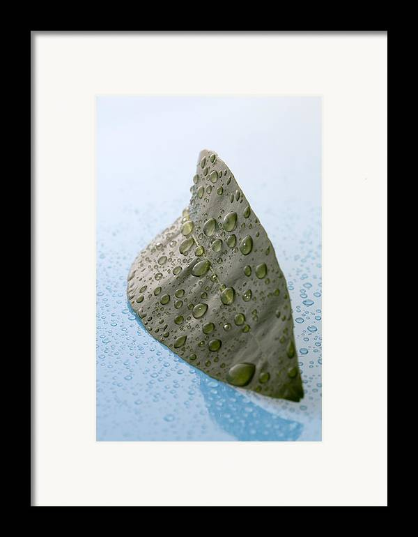 Citrus Leaf Framed Print featuring the photograph Citrus Leaf by Frank Tschakert