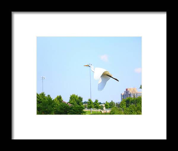 Framed Print featuring the photograph City Flyer by Tony Umana