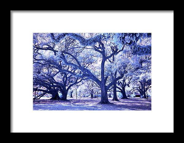 Trees Framed Print featuring the photograph City Park by Nicole Couture-Lord