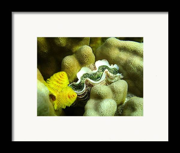 Underwater Framed Print featuring the photograph Clam On The Reef by Chad Natti