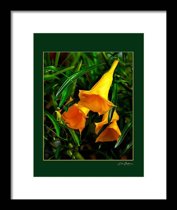 Flower Framed Print featuring the photograph Clarion Call by Richard Gordon
