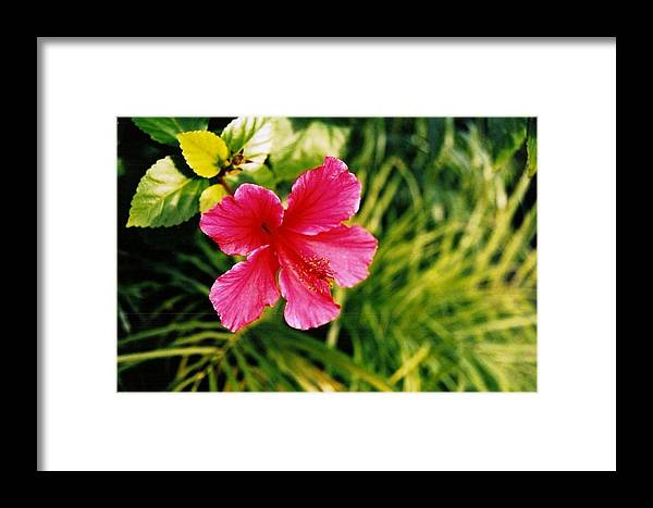 Flower Framed Print featuring the photograph Classical Style by Brian Edward Harris
