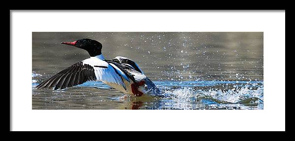 Birds Framed Print featuring the photograph Clear For Takeoff by Taylor Howe