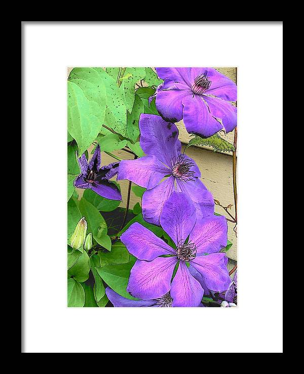 Clematis Framed Print featuring the photograph Clematis Trail by Vijay Sharon Govender