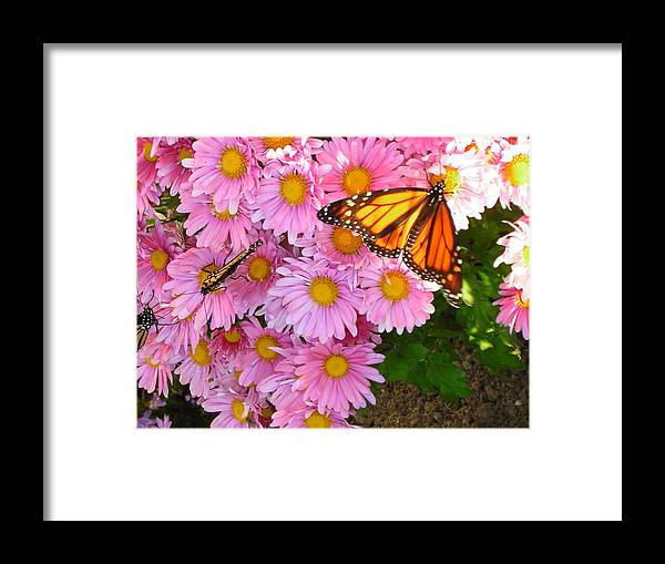 Butterfly Framed Print featuring the photograph Cliff House Butterflies by Heather Weikel