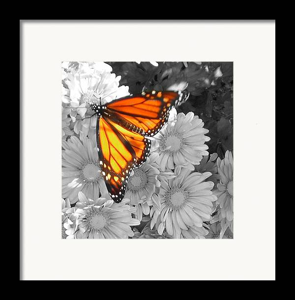 Cliff House Framed Print featuring the photograph Cliff House Butterfly by Heather Weikel