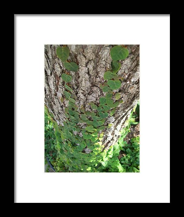 Ivy Framed Print featuring the photograph Climbers by Laurette Escobar