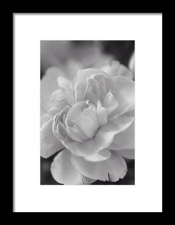 Abstract Framed Print featuring the photograph Close To You by Lucinda Walter