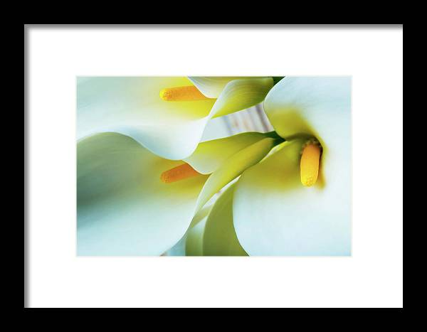 Graphic Framed Print featuring the photograph Close Up Calla Lilies by Garry Gay