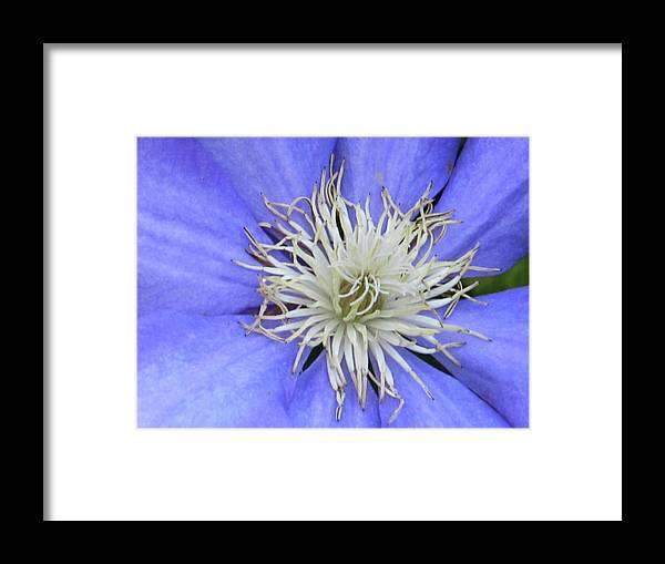 Flowers Framed Print featuring the photograph Close Up by Michele Caporaso