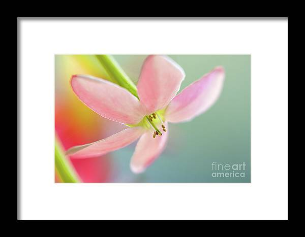 Pink Framed Print featuring the photograph Close Up Of A Pink Flower by Ofer Zilberstein