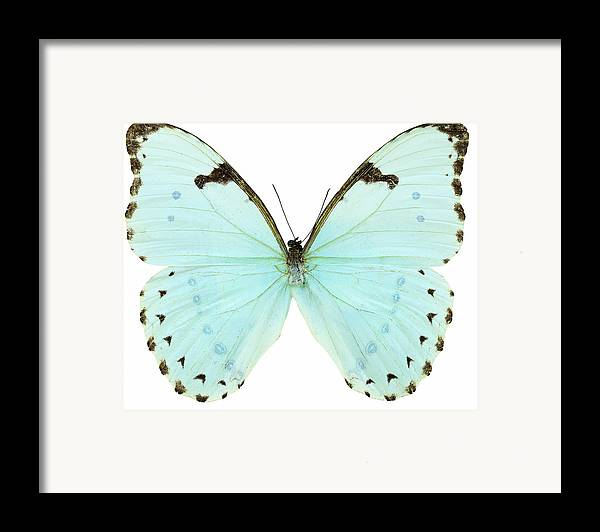 Horizontal Framed Print featuring the photograph Close-up Of A White Butterfly by Stockbyte