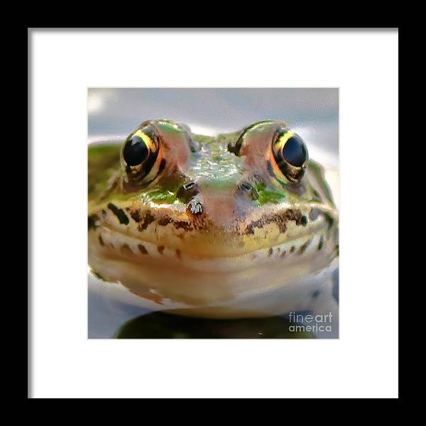 Leopard Frog Framed Print featuring the photograph Close-up Of Leopard Frog by Amber D Hathaway Photography