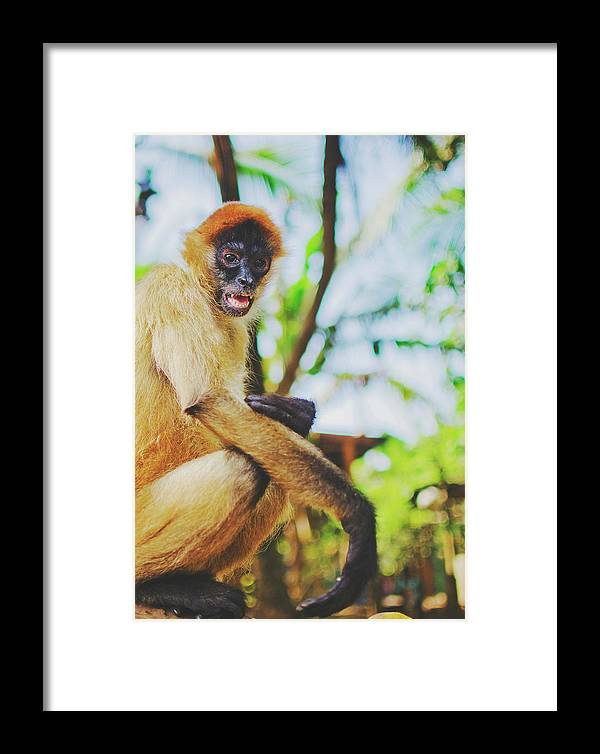 Animal Framed Print featuring the photograph Close-up Portrait Of A Nicaraguan Spider Monkey Sitting And Looking At The Camera by Srdjan Kirtic