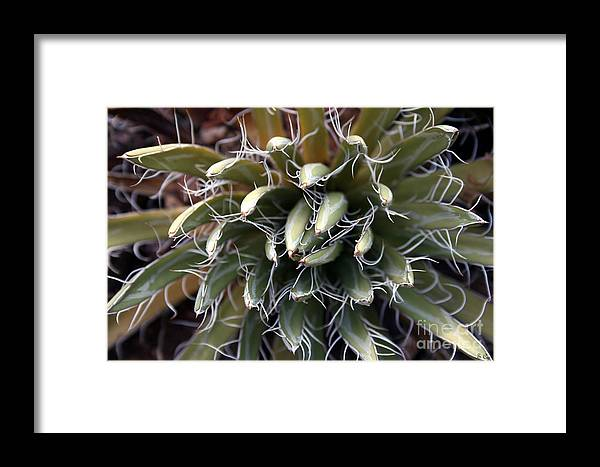 Cactus Framed Print featuring the photograph Closed Mouth by S Cyr