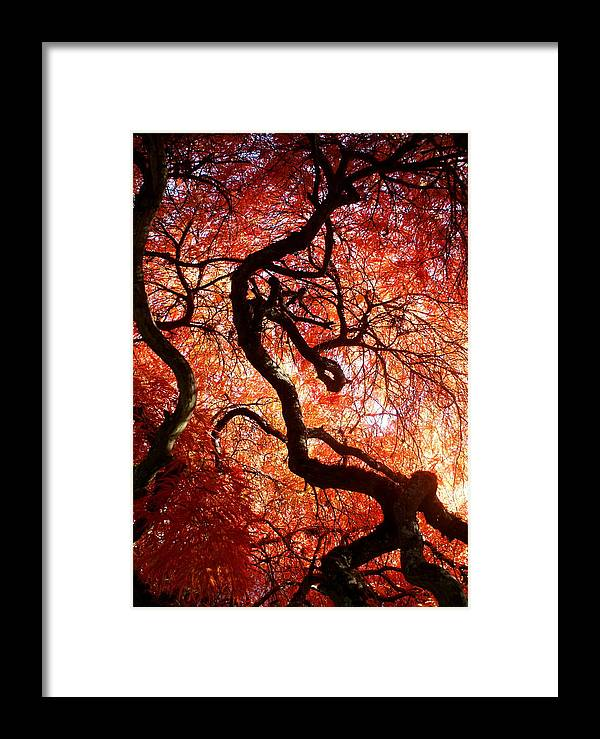 Botany Framed Print featuring the photograph Closeness by Sonja Anderson