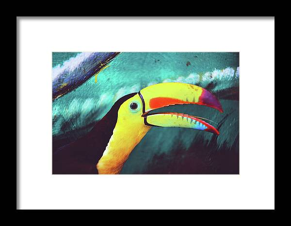 Adorable Framed Print featuring the photograph Closeup Portrait Of A Colorful And Exotic Toucan Bird Against Blue Background Nicaragua by Srdjan Kirtic
