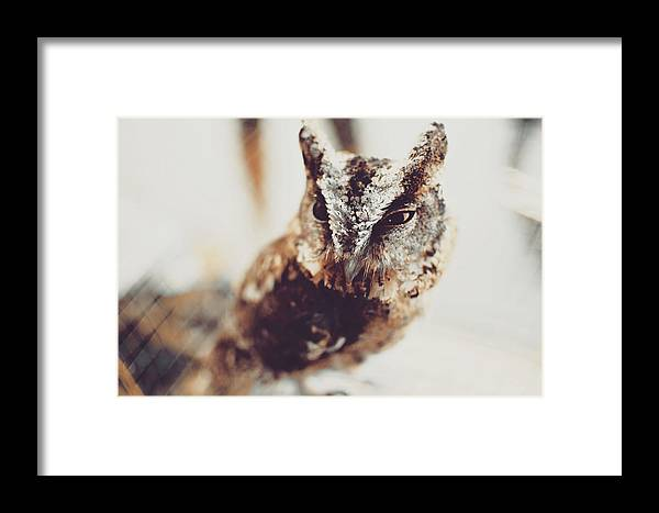 Animal Framed Print featuring the photograph Closeup Portrait Of A Young Owl Looking At The Camera by Srdjan Kirtic