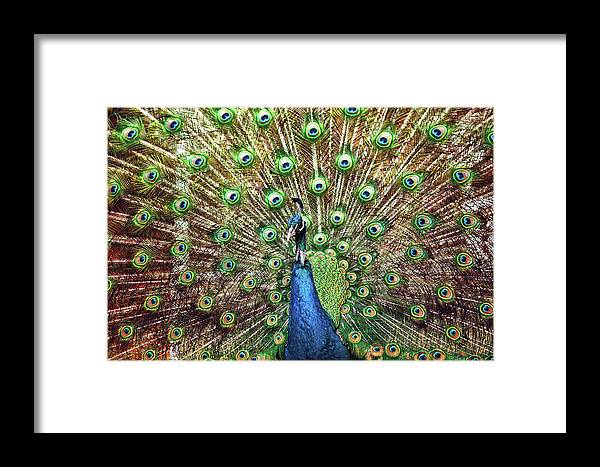 All Framed Print featuring the photograph Closeup Portrait Of An Indian Peacock Displaying Its Plumage by Srdjan Kirtic