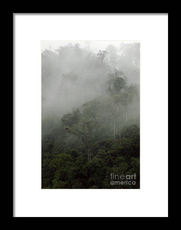 Rainforest Framed Print featuring the photograph Cloud Forest by Kathy McClure