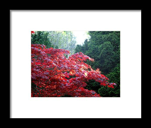 James Gardens Framed Print featuring the photograph Clouds Of Leaves by Ian MacDonald