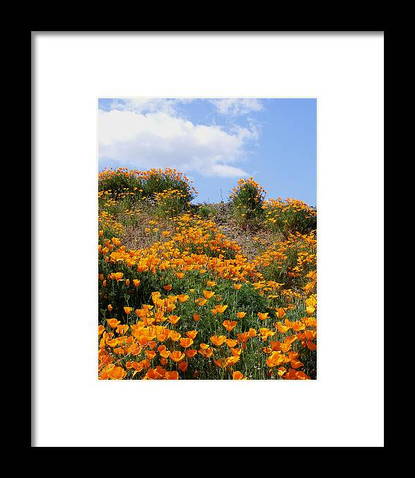 Framed Print featuring the photograph Clouds Over Poppies by Gail Salitui